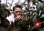 Image of harvesting chickens fruits and vegatables United States USA, 1956, second 60 stock footage video 65675071652
