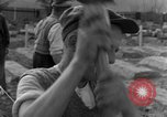 Image of completes graves Germany, 1945, second 57 stock footage video 65675071657