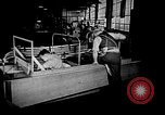 Image of weasel United States USA, 1943, second 59 stock footage video 65675071683