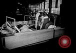 Image of weasel United States USA, 1943, second 60 stock footage video 65675071683