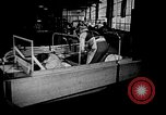 Image of weasel United States USA, 1943, second 61 stock footage video 65675071683
