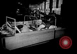 Image of weasel United States USA, 1943, second 62 stock footage video 65675071683