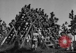 Image of 442nd Regimental Combat Team Mississippi United States USA, 1942, second 2 stock footage video 65675071693