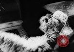 Image of poodles Bornhoeved Germany, 1962, second 45 stock footage video 65675071768