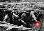 Image of 158th Infantry 2nd Battalion Arawe New Britain Papua New Guinea, 1943, second 30 stock footage video 65675071778