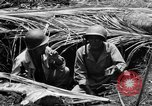 Image of 158th Infantry 2nd Battalion Arawe New Britain Papua New Guinea, 1943, second 31 stock footage video 65675071778