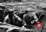 Image of 158th Infantry 2nd Battalion Arawe New Britain Papua New Guinea, 1943, second 32 stock footage video 65675071778
