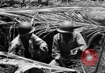 Image of 158th Infantry 2nd Battalion Arawe New Britain Papua New Guinea, 1943, second 33 stock footage video 65675071778
