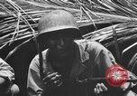 Image of 158th Infantry 2nd Battalion Arawe New Britain Papua New Guinea, 1943, second 44 stock footage video 65675071778