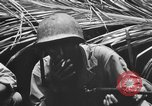 Image of 158th Infantry 2nd Battalion Arawe New Britain Papua New Guinea, 1943, second 45 stock footage video 65675071778