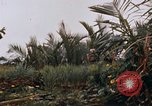 Image of United States 9th Infantry Division South Vietnam, 1967, second 61 stock footage video 65675071836