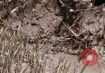 Image of United States 9th Infantry Division South Vietnam, 1967, second 11 stock footage video 65675071839