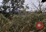 Image of United States 9th Infantry Division South Vietnam, 1967, second 42 stock footage video 65675071839