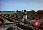 Image of Helmand River Project Afghanistan, 1979, second 19 stock footage video 65675071854