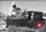 Image of Russian troops Europe, 1943, second 27 stock footage video 65675072037