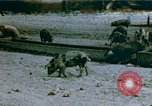 Image of Recreation by relocated Japanese-Americans Crystal City Texas USA, 1943, second 1 stock footage video 65675072072