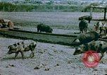 Image of Recreation by relocated Japanese-Americans Crystal City Texas USA, 1943, second 3 stock footage video 65675072072