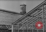 Image of pea crop New Jersey United States USA, 1946, second 4 stock footage video 65675072231