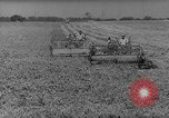 Image of pea crop New Jersey United States USA, 1946, second 8 stock footage video 65675072231