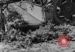 Image of pea crop New Jersey United States USA, 1946, second 12 stock footage video 65675072231