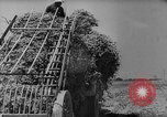Image of pea crop New Jersey United States USA, 1946, second 14 stock footage video 65675072231