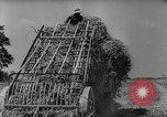 Image of pea crop New Jersey United States USA, 1946, second 16 stock footage video 65675072231