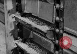 Image of pea crop New Jersey United States USA, 1946, second 20 stock footage video 65675072231