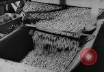 Image of pea crop New Jersey United States USA, 1946, second 21 stock footage video 65675072231