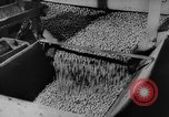 Image of pea crop New Jersey United States USA, 1946, second 22 stock footage video 65675072231