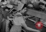 Image of pea crop New Jersey United States USA, 1946, second 23 stock footage video 65675072231