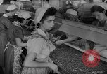Image of pea crop New Jersey United States USA, 1946, second 24 stock footage video 65675072231
