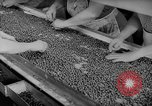 Image of pea crop New Jersey United States USA, 1946, second 27 stock footage video 65675072231