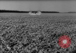 Image of pea crop New Jersey United States USA, 1946, second 38 stock footage video 65675072231