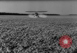 Image of pea crop New Jersey United States USA, 1946, second 40 stock footage video 65675072231