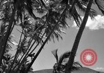 Image of man on palm tree Hawaii USA, 1942, second 22 stock footage video 65675072321