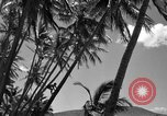 Image of man on palm tree Hawaii USA, 1942, second 23 stock footage video 65675072321