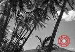 Image of man on palm tree Hawaii USA, 1942, second 24 stock footage video 65675072321