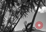 Image of man on palm tree Hawaii USA, 1942, second 25 stock footage video 65675072321