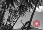 Image of man on palm tree Hawaii USA, 1942, second 26 stock footage video 65675072321