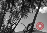 Image of man on palm tree Hawaii USA, 1942, second 27 stock footage video 65675072321