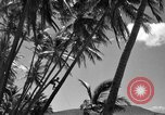 Image of man on palm tree Hawaii USA, 1942, second 28 stock footage video 65675072321