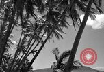Image of man on palm tree Hawaii USA, 1942, second 29 stock footage video 65675072321