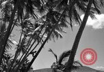 Image of man on palm tree Hawaii USA, 1942, second 30 stock footage video 65675072321