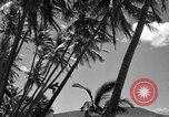 Image of man on palm tree Hawaii USA, 1942, second 31 stock footage video 65675072321