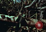 Image of survival techniques Philippines, 1968, second 7 stock footage video 65675072401