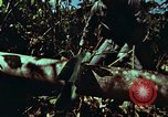 Image of survival techniques Philippines, 1968, second 8 stock footage video 65675072401