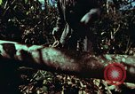 Image of survival techniques Philippines, 1968, second 15 stock footage video 65675072401