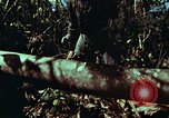 Image of survival techniques Philippines, 1968, second 17 stock footage video 65675072401