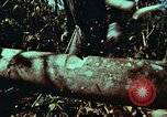 Image of survival techniques Philippines, 1968, second 19 stock footage video 65675072401