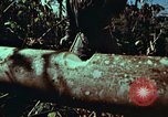 Image of survival techniques Philippines, 1968, second 22 stock footage video 65675072401